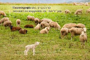 Τα «Αγρονέα» τακτικά κοντά μας